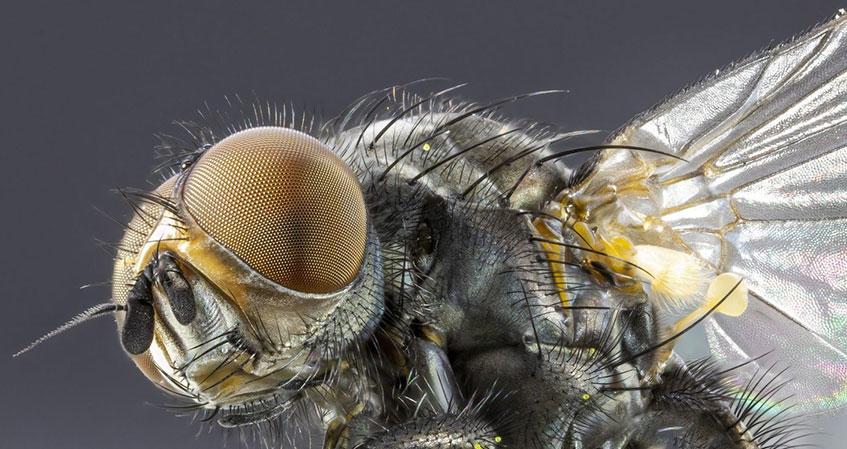 Zararlı Böcek Türleri ve Mücadele Yöntemleri