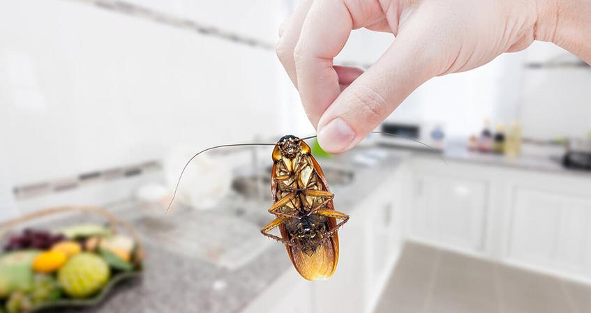 Hamam Böceği İlaçlama Nasıl Yapılır?